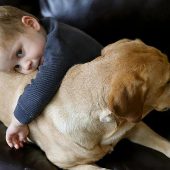 service_dog_for_child_with_autism.jpeg