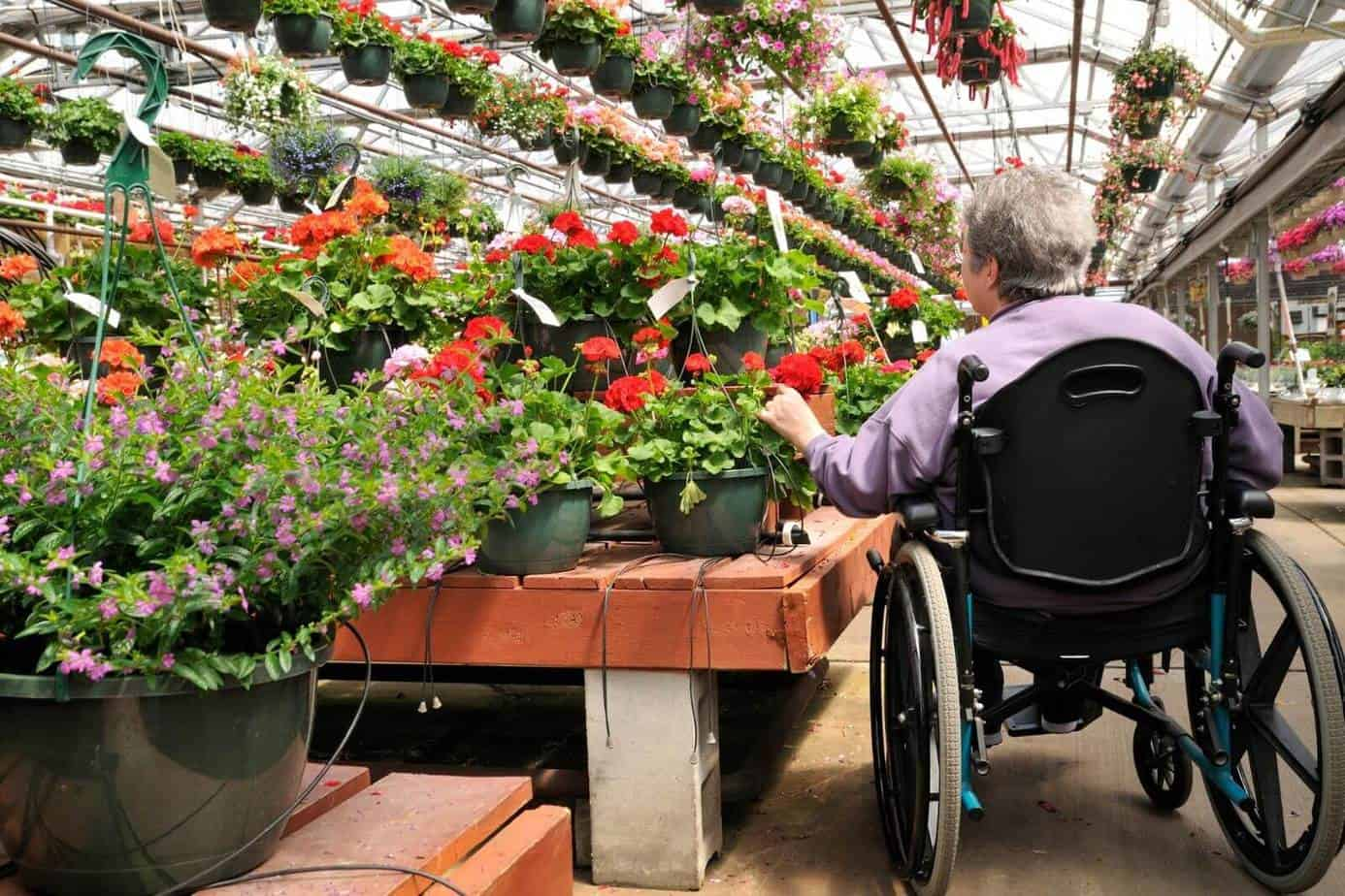 a senior lady in a wheelchair picking flowers