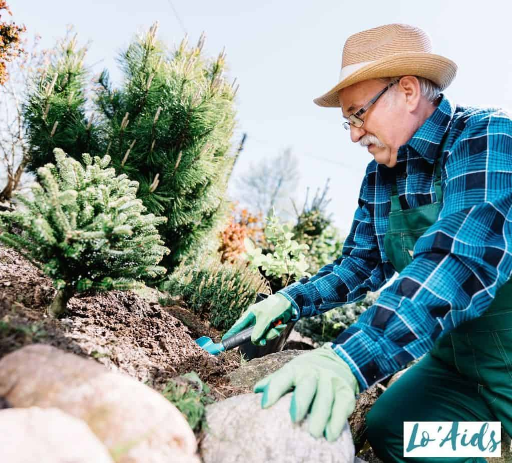 old man planting bonsai tree