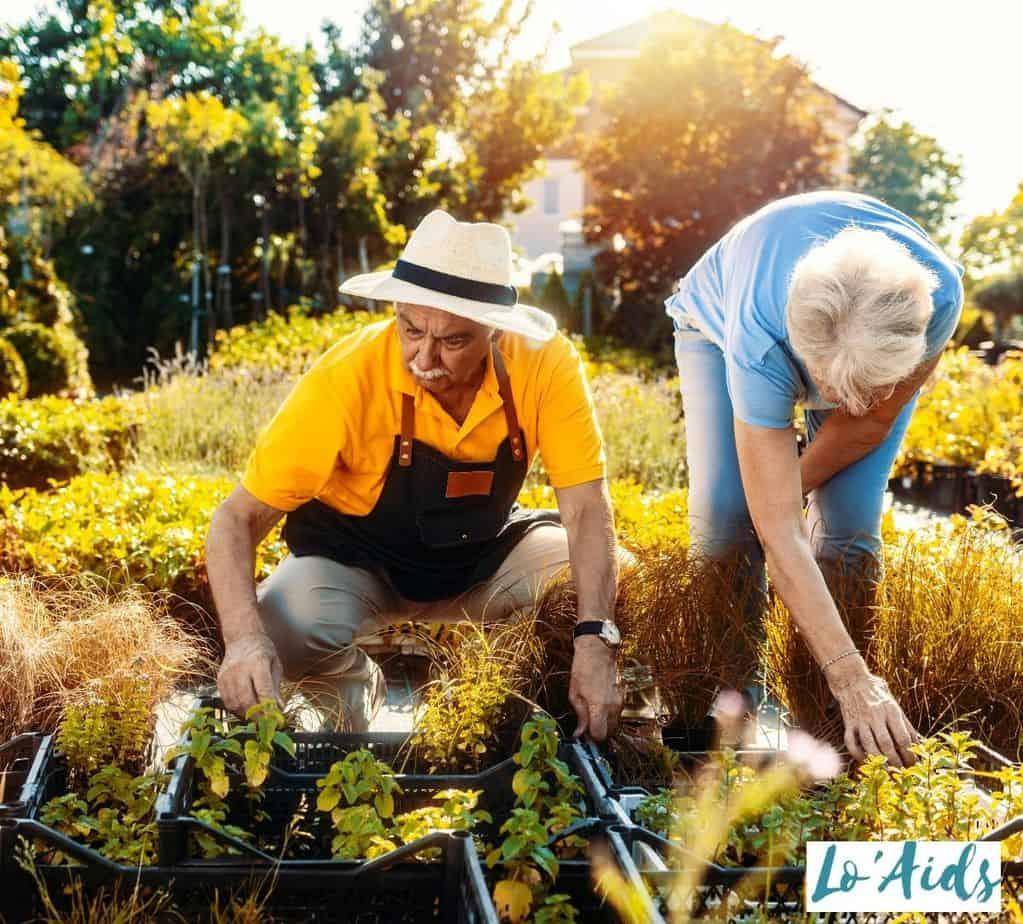 senior couple gardening